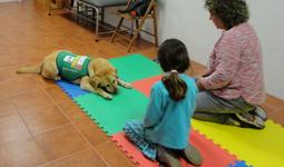 Taller terapia asistida con perros