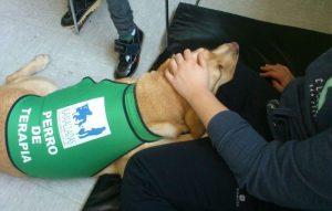 Terapia perros Asemgalicia
